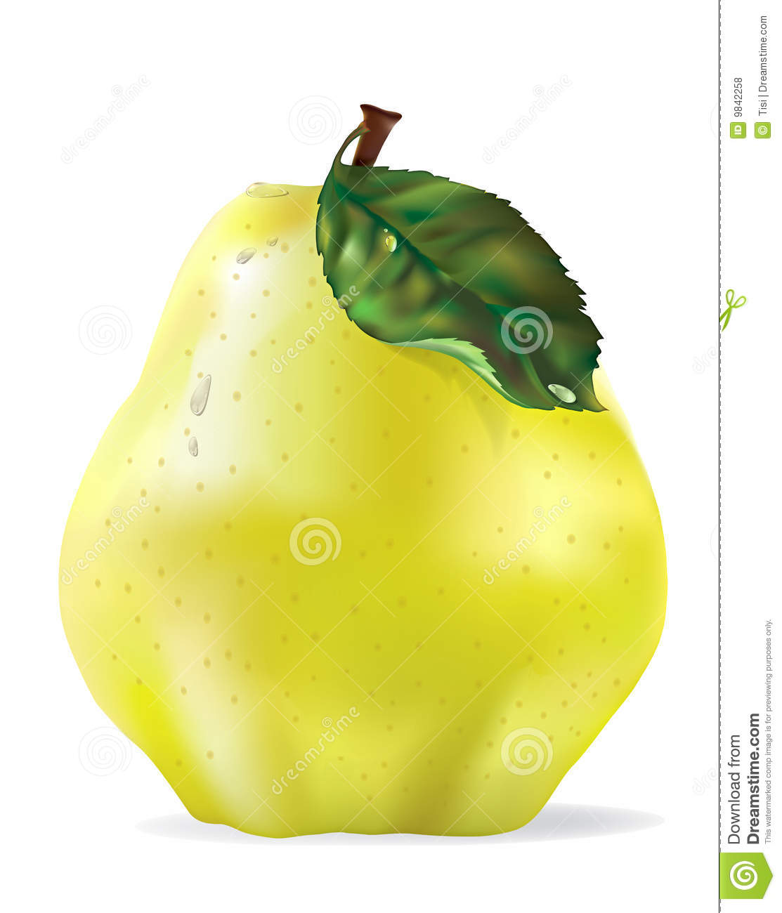 Vector Yellow Quince With Drops Isolated Royalty Free Stock Photos.
