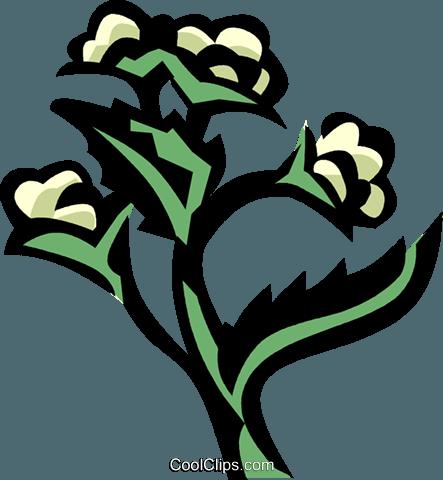 quinine Royalty Free Vector Clip Art illustration.