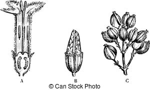 Quinine Vector Clip Art Illustrations. 20 Quinine clipart EPS.