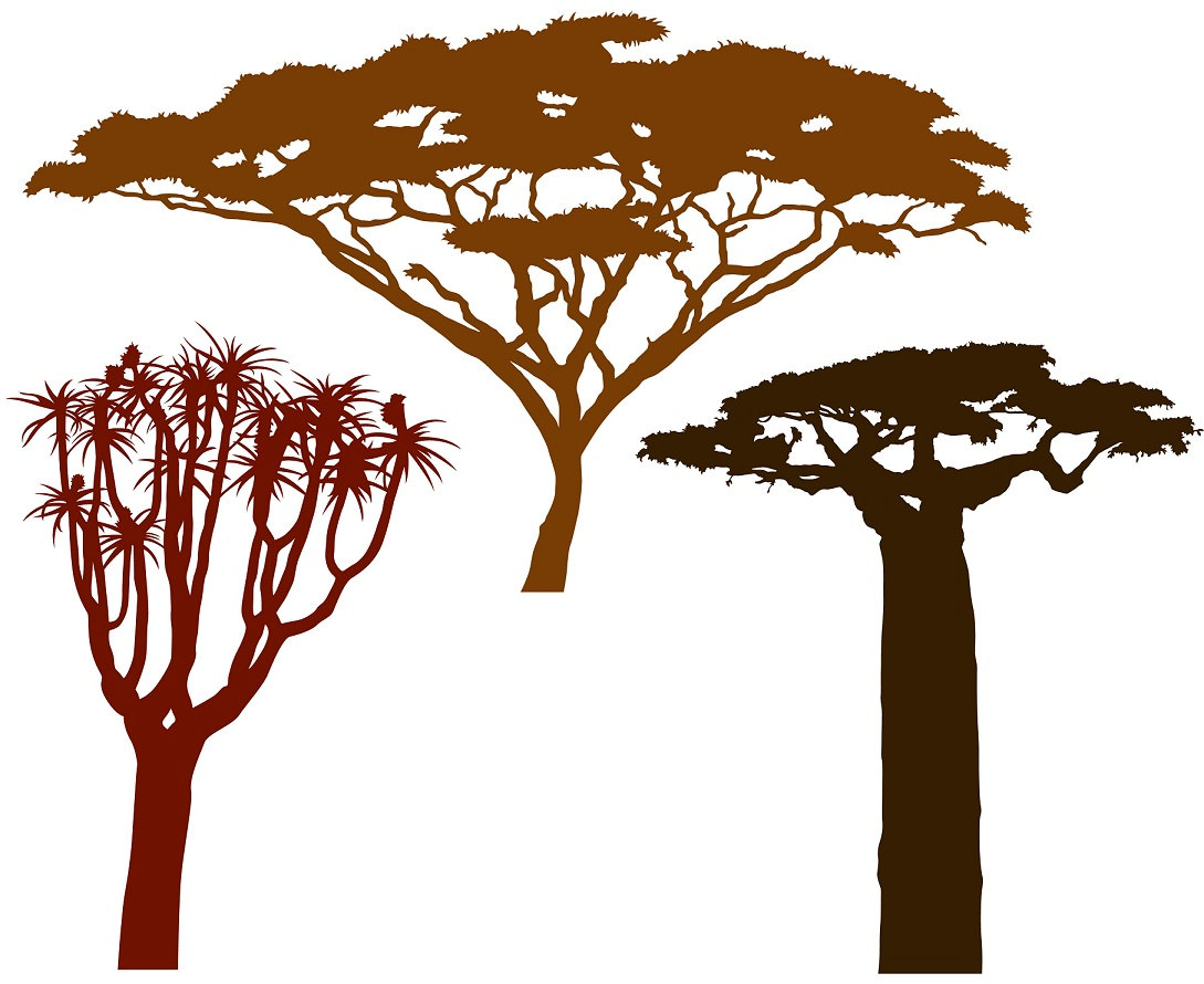 African Trees.