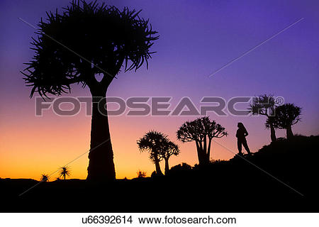 Stock Photo of Hiker in quiver tree forest, Aloe dichotoma.