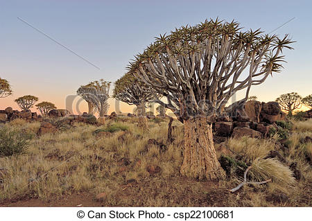 Pictures of Sunrise at the Quiver Tree Forest, Namibia.