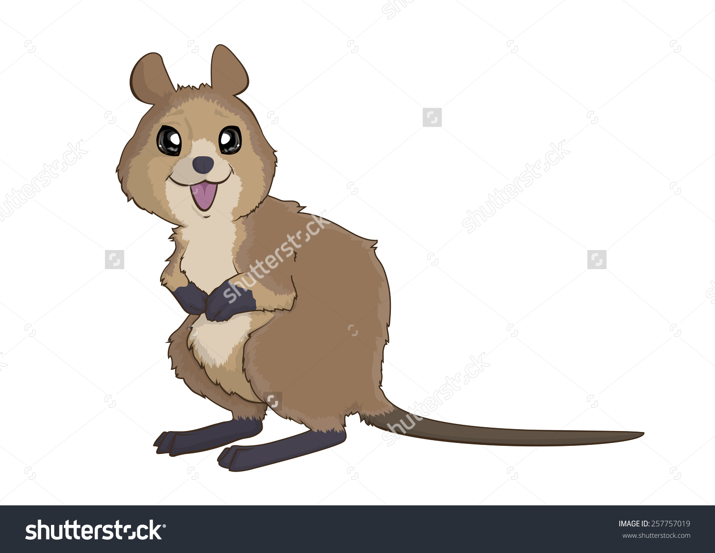 Quokka Australian Animal Stock Illustration 257757019.