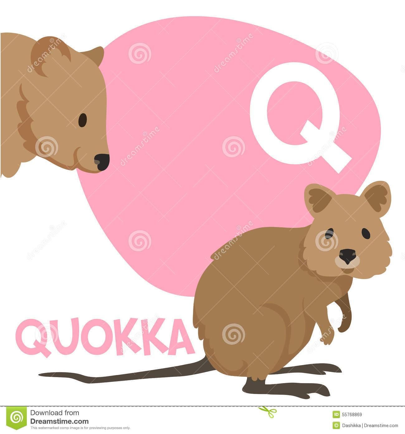 Quokka Stock Illustrations.