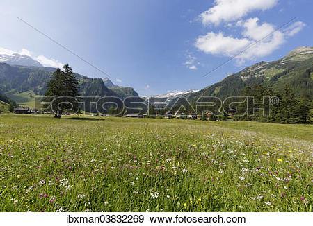 "Stock Photograph of ""Nenzinger Himmel alpine meadow, Gamperdonatal."