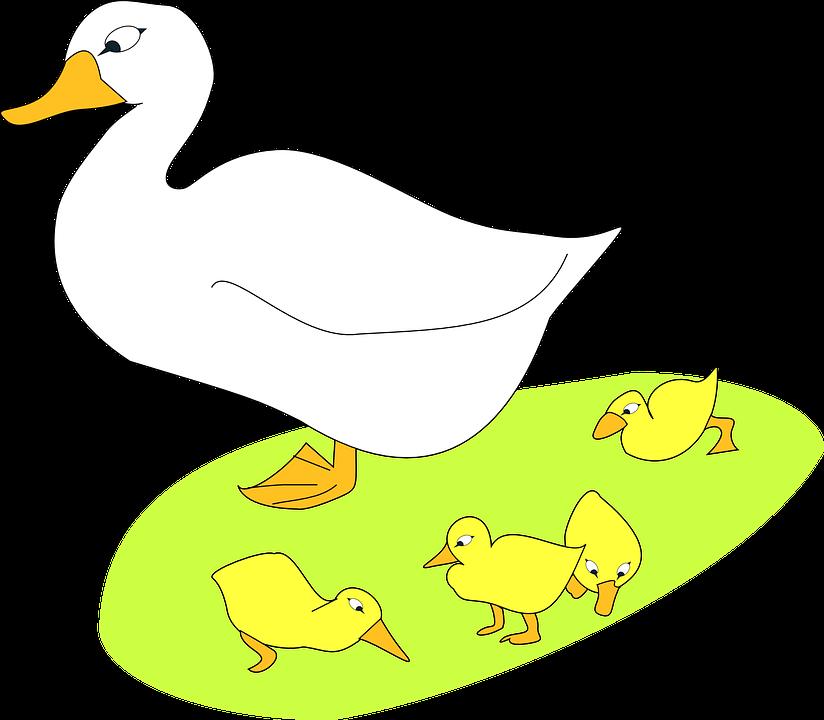 Free vector graphic: Bird, Goose, Gosling, Animal.