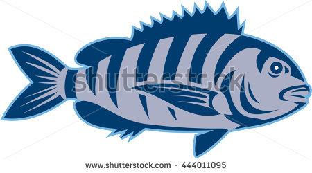 Vector Cartoon Prawn Stock Vector 127786169.