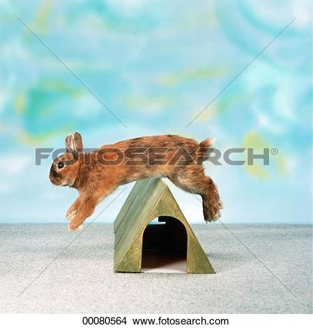 Stock Photo of Juniors, animal, animals, barrier, barriers.