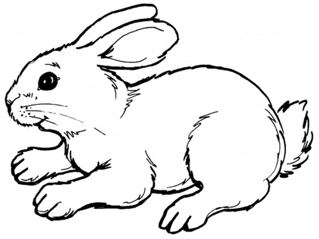 Black And White Clipart Rabbit.