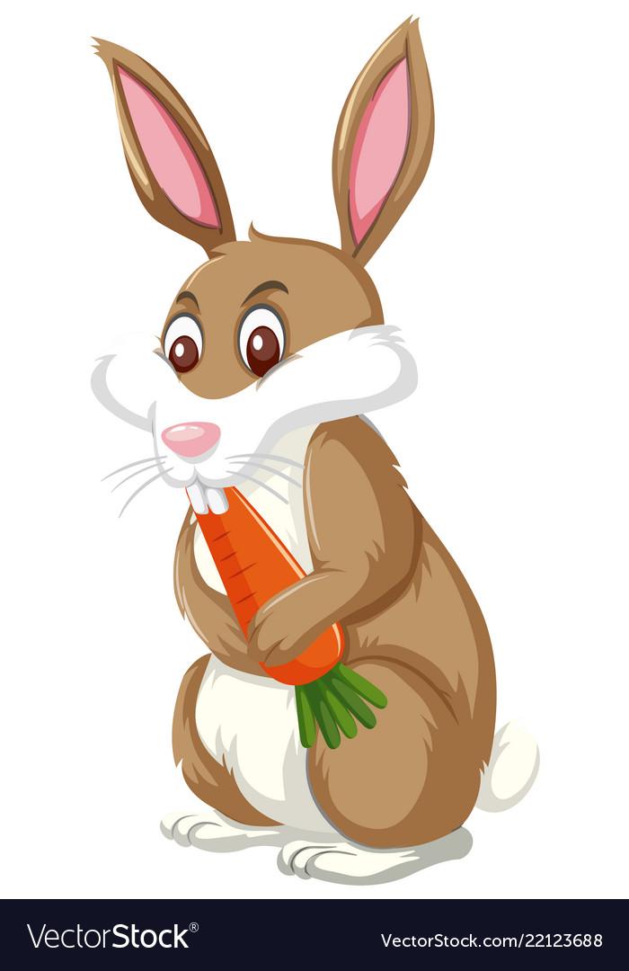 A rabbit eating carrot.