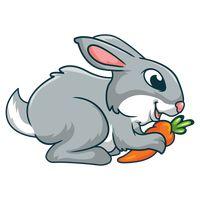 Eating Eat Bunny Bunnies Rabbit Rabbits Animal Animals.
