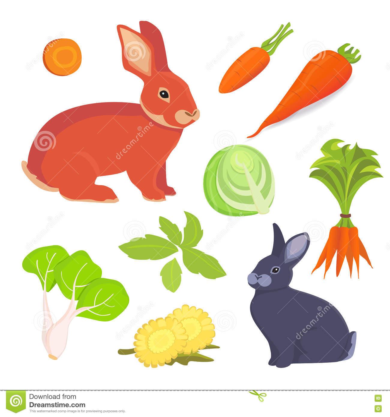 Hare And Rabbit Cartoon Illustration. Rabbits Food Vector.