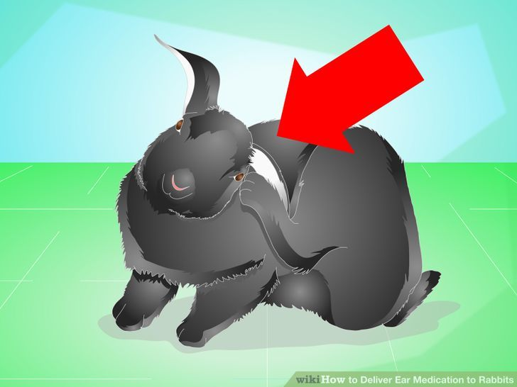 3 Ways to Deliver Ear Medication to Rabbits.