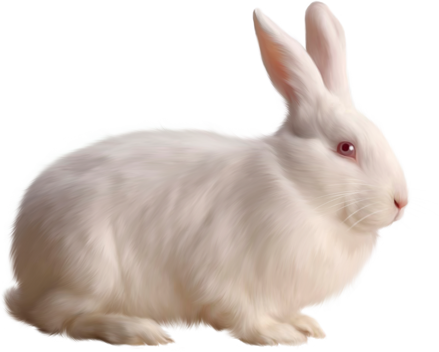 Rabbit HD PNG Transparent Rabbit HD.PNG Images..