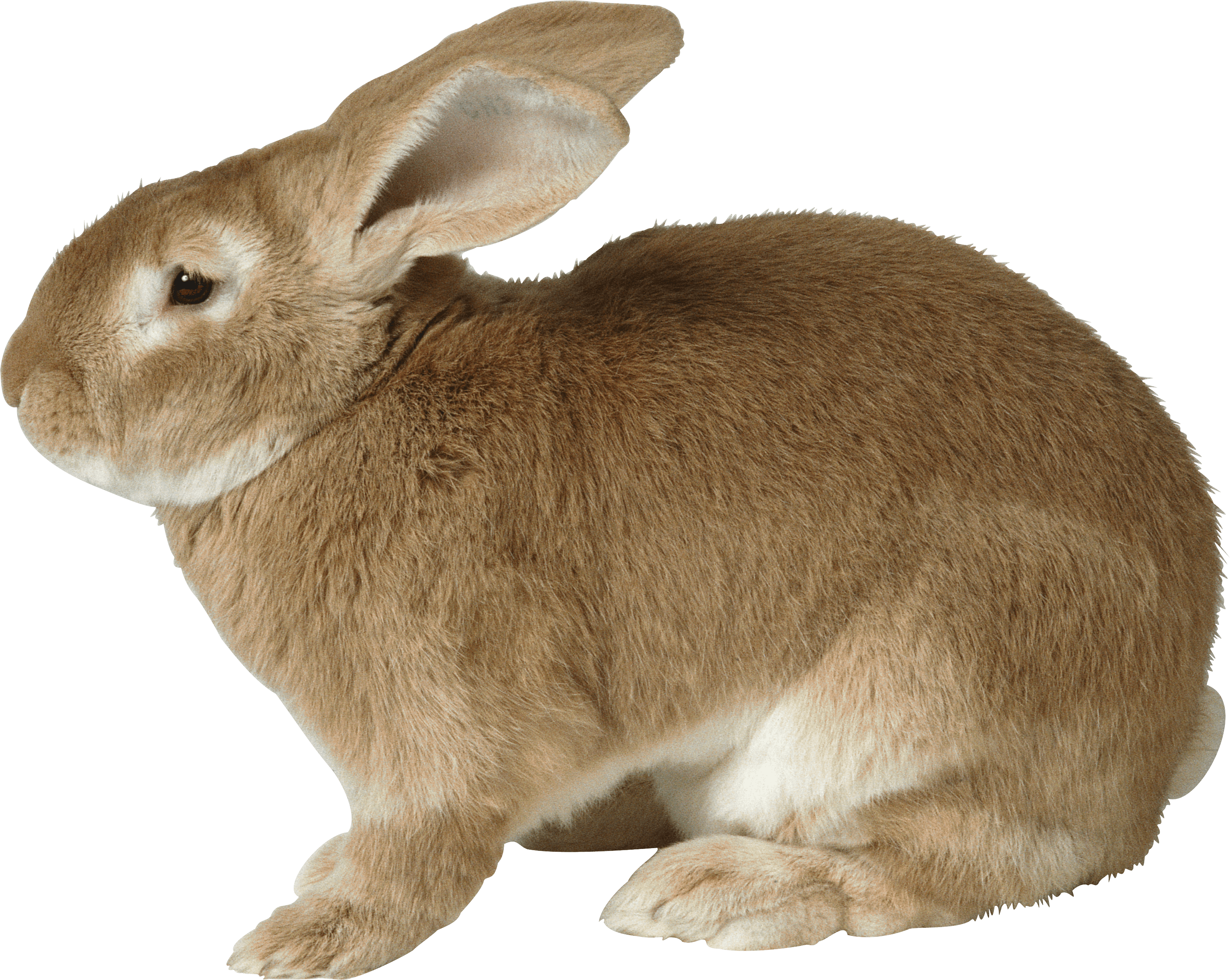 sad brown rabbit PNG Image.