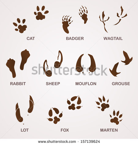 Rabbits Foot Stock Images, Royalty.