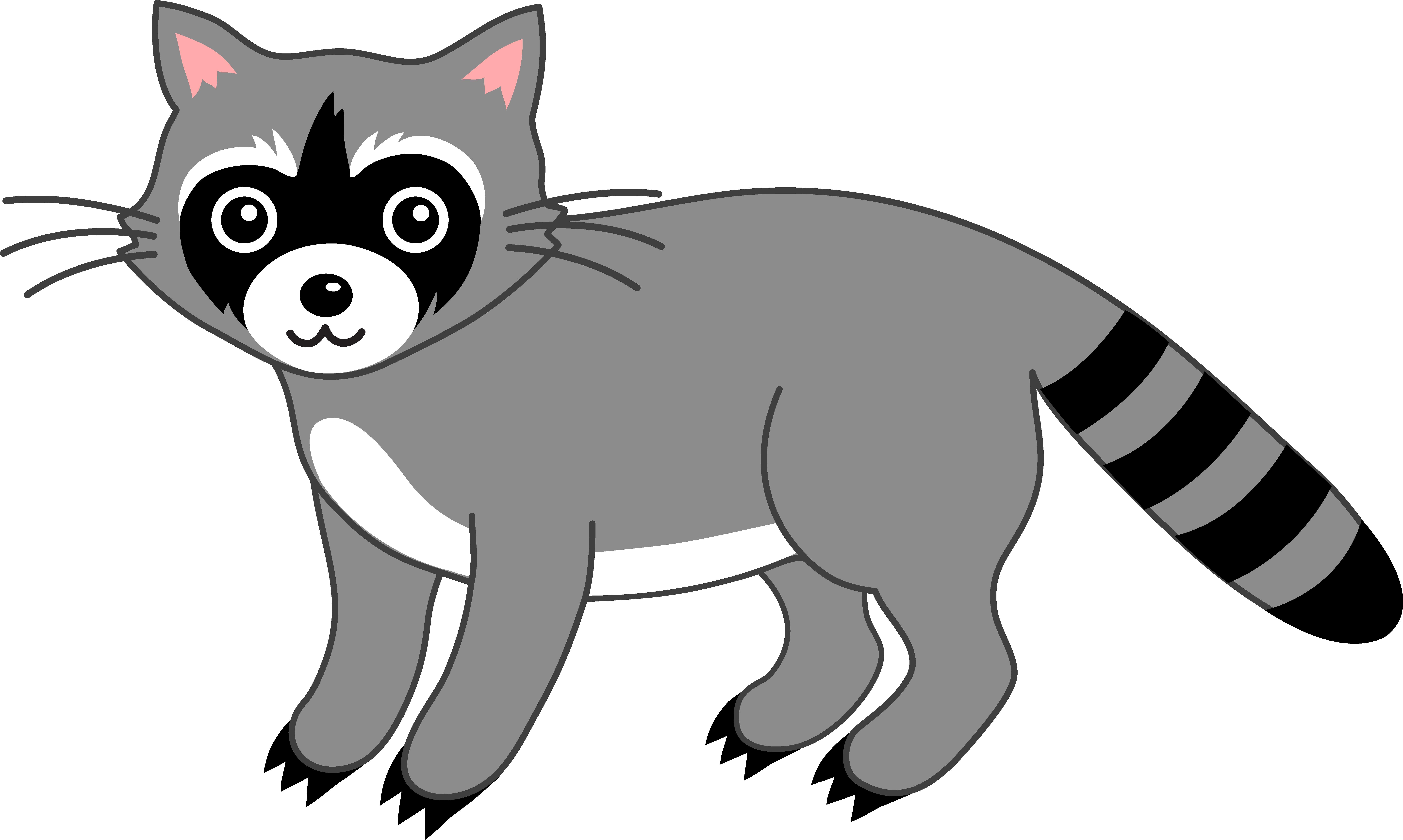 Cute Grey Raccoon.