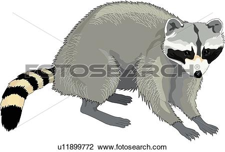 Raccoon Clip Art and Illustration. 2,365 raccoon clipart vector.