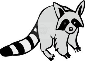 Raccoon Clip Art Pictures.