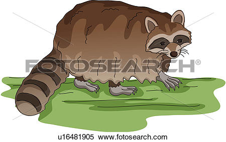 Clipart of wild animal, vertebrate, raccoon dog, land animal.