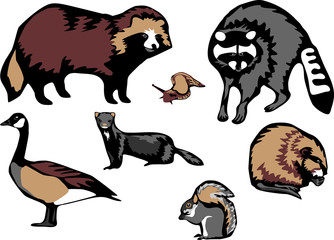 Showing post & media for Cartoon raccoon dog.