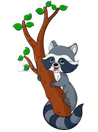 Raccoon In Tree Clipart.