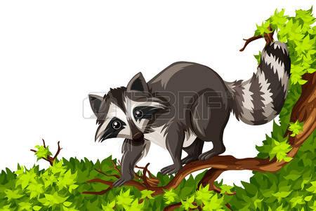 Raccoon Clip Art Stock Photos Images. Royalty Free Raccoon Clip.