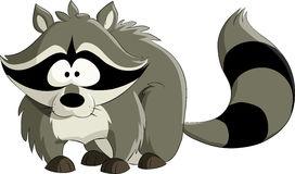 Raccoon Stock Illustrations.