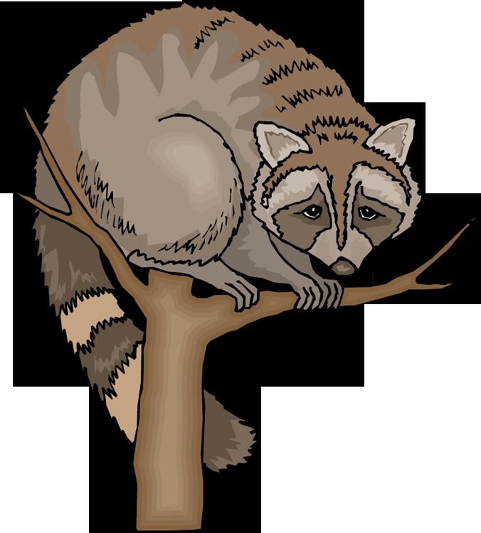 Funny Raccoon Cliparts.