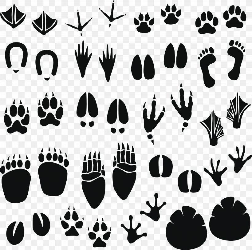 Raccoon Footprint Animal Track Clip Art, PNG, 4077x4043px.