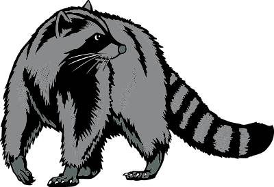 Free Raccoon Clipart Pictures.
