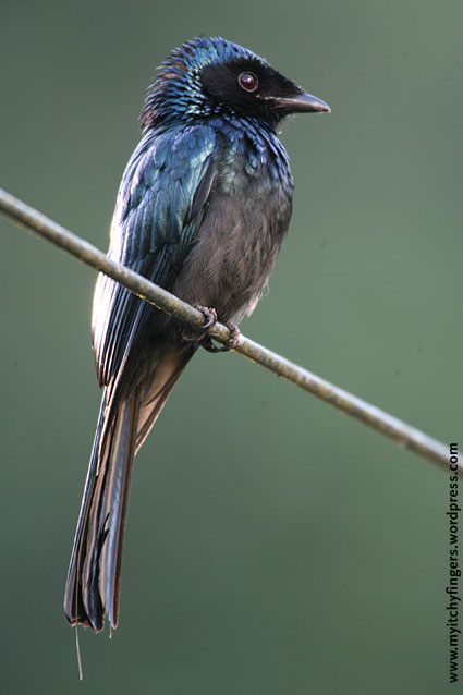 1000+ images about BIRD: bLuE on Pinterest.