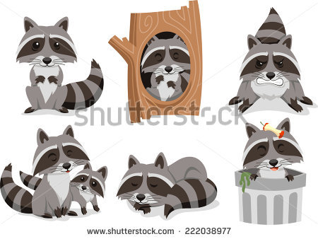 Raccoon In Tree Stock Images, Royalty.