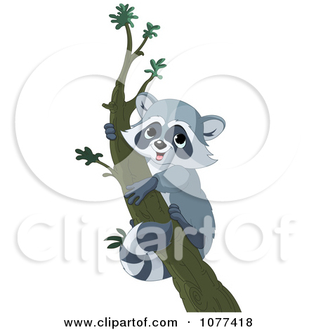 A Raccoon in Tree Clip Art.