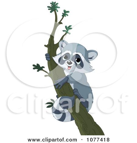 A Raccoon in Tree Clip Art.