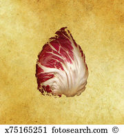 Radicchio Illustrations and Clip Art. 13 radicchio royalty free.