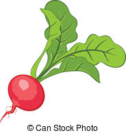 Vectors Illustration of radish csp3696347.