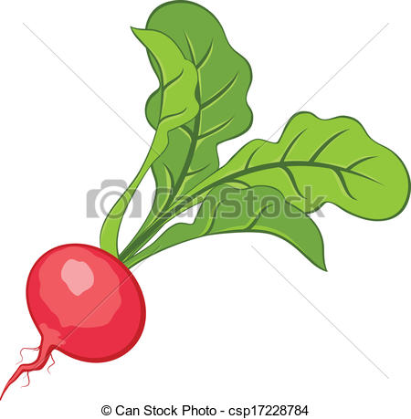 Radish Stock Illustrations. 3,794 Radish clip art images and.