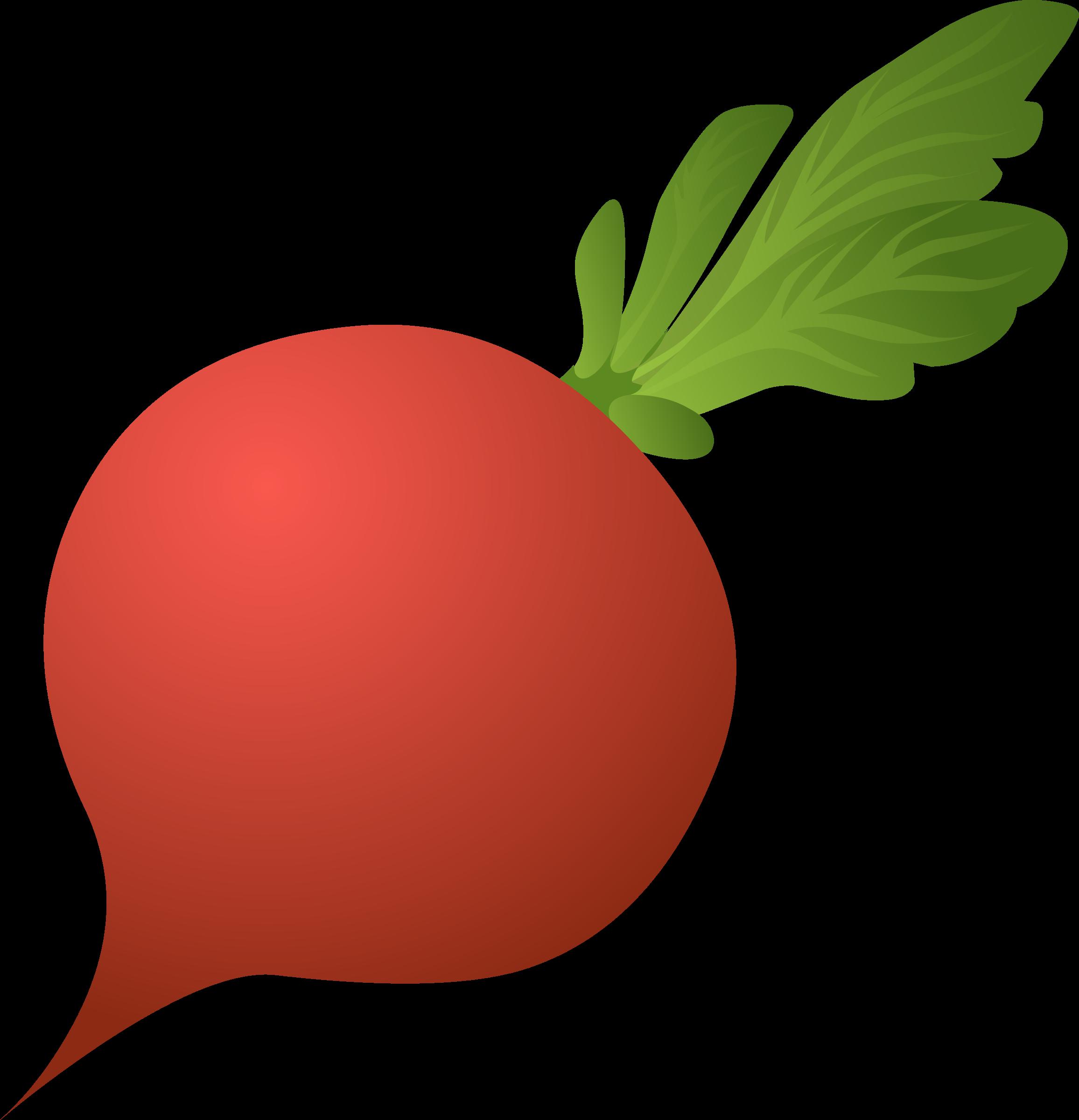 Clipart radish.