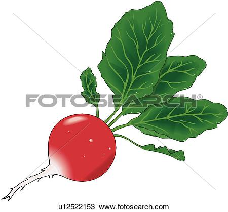 Radish Clipart and Illustration. 3,221 radish clip art vector EPS.