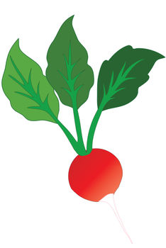 Showing post & media for Cartoon clip art radishes.