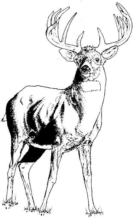 Free clipart elk.