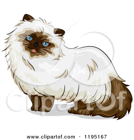 Ragdoll Cat Clipart.