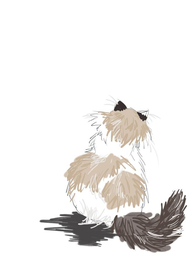 Ragdoll Cat.would make a great tattoo.
