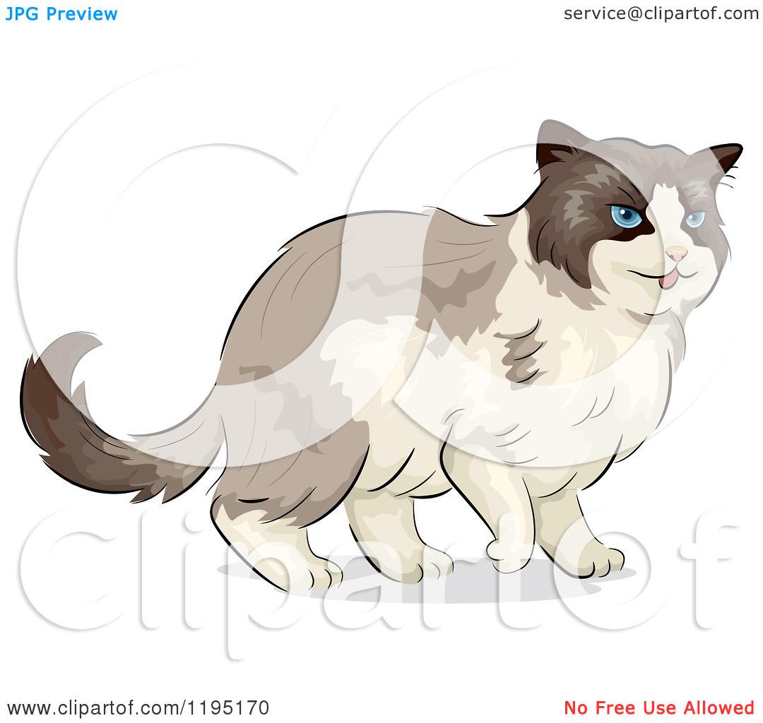 Cartoon of a Cute Ragdoll Cat with Blue Eyes.