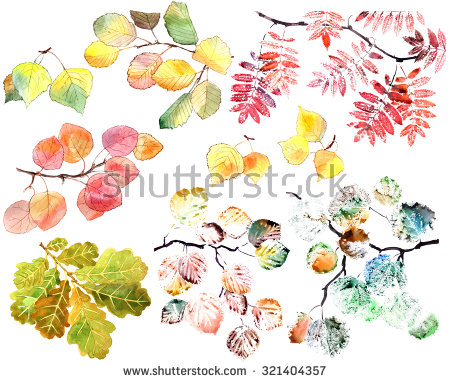 Aspen Leaf Stock Photos, Royalty.