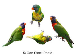 Rainbow lorikeet parrot Images and Stock Photos. 470 Rainbow.
