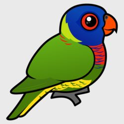 Rainbow Lorikeet products < Parrots & Parakeets < Birds.