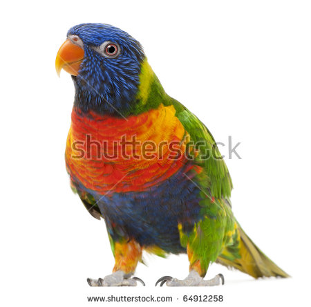 Rainbow Lorikeet Stock Images, Royalty.
