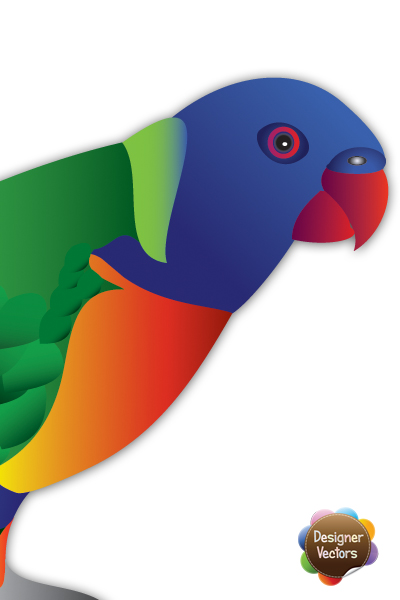 Rainbow Lorikeet Vector.